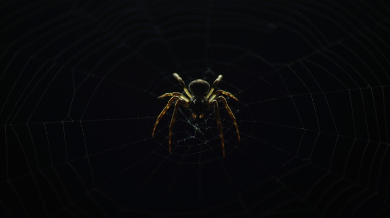 spider-2605938_1920