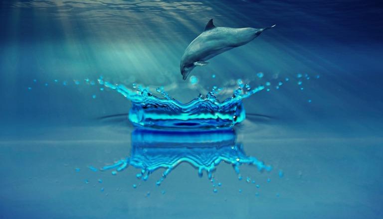 dolphin-1739674_1920