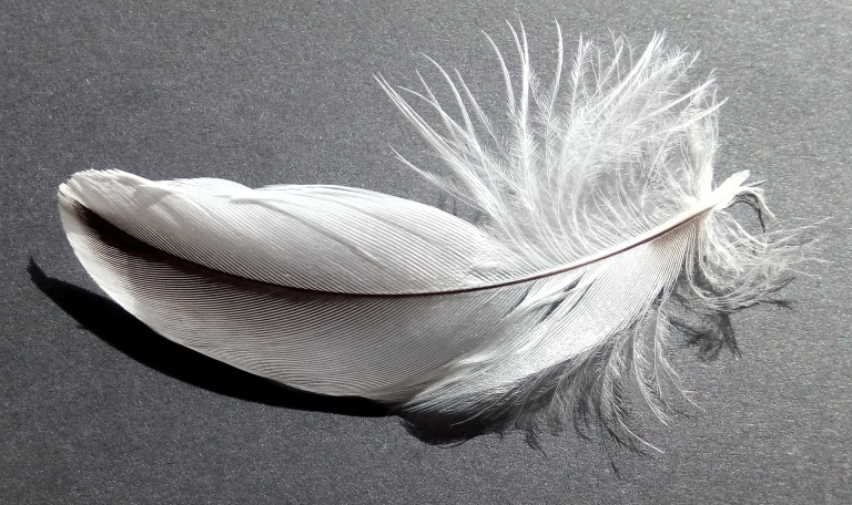 bird-feather-2620157_1920