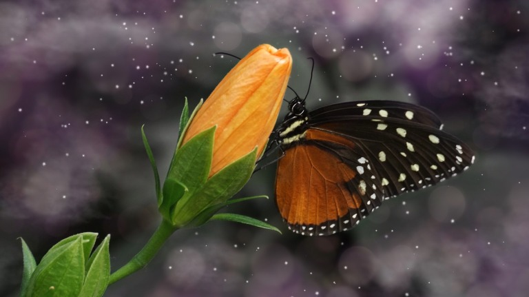 butterfly-3374887_1920