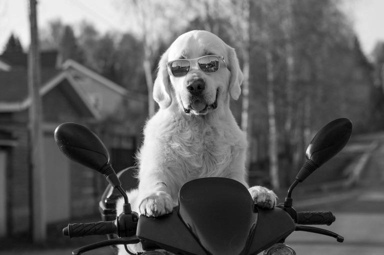 dog-2537902_1920