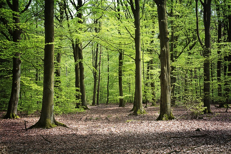 forest-3416908_1920