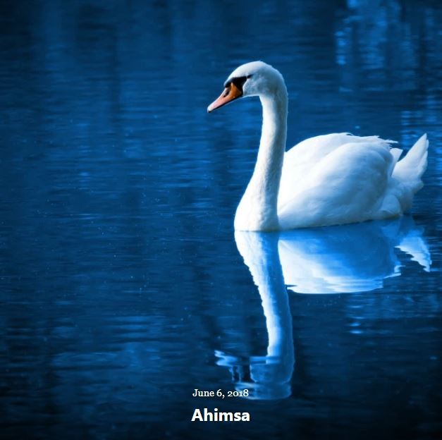 BLOG AHIMSA JUNE 6 2018