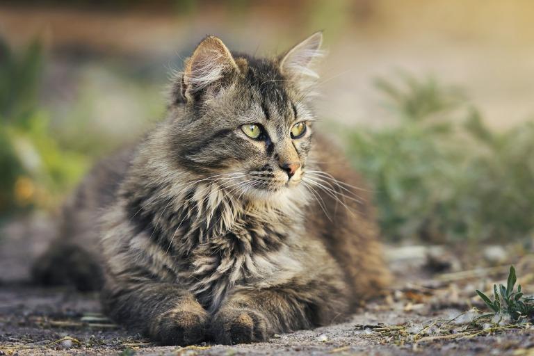 cat-3449999_1920
