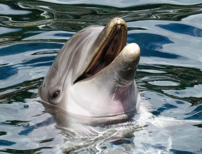 dolphin-1611509_1920