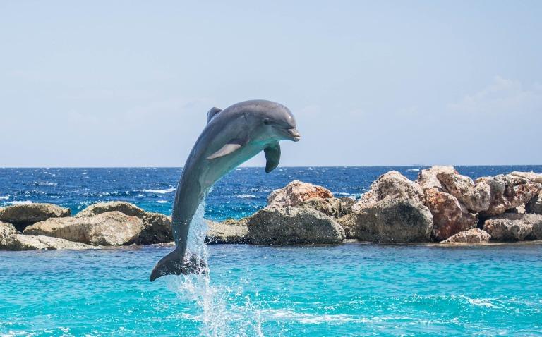 dolphin-906176_1920