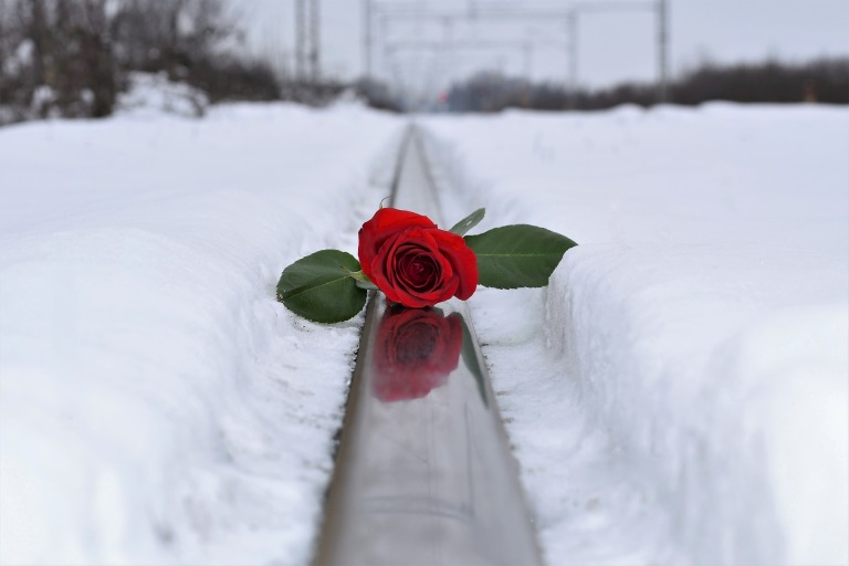 red-rose-in-snow-3273572_1920