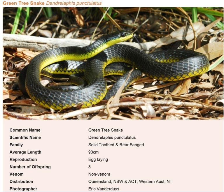 Snake 80417 on Verandah outside our back door.