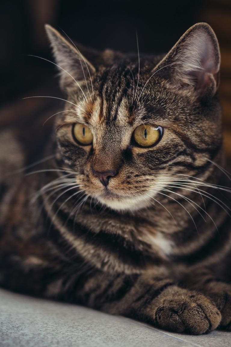 cat-3523992_1920
