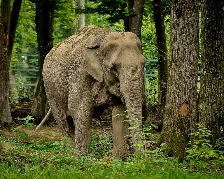 elephant-399305_1280