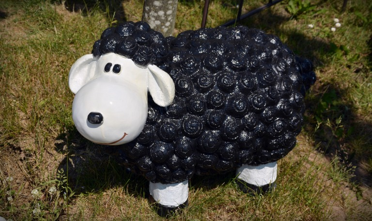 black-sheep-1437611_1920