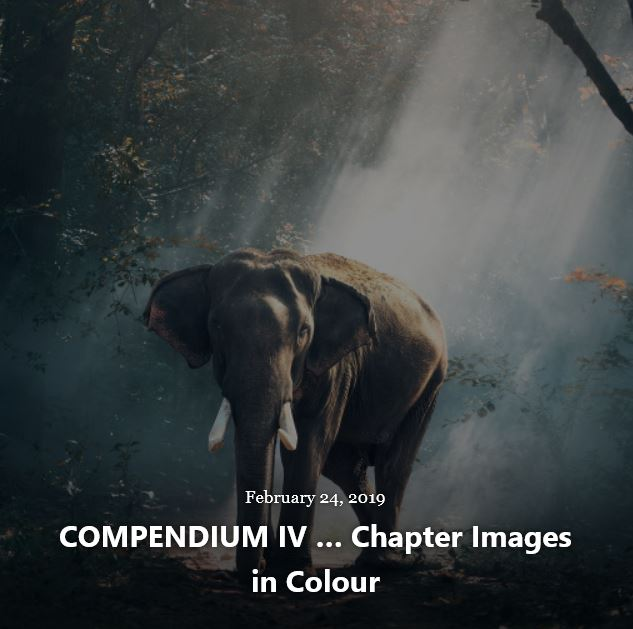 BLOG COMPENDIUM IV IMAGES FEB 24 2019