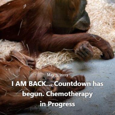 BLOG I AM BACK CHEMOTHERAPY MAY 3 2019