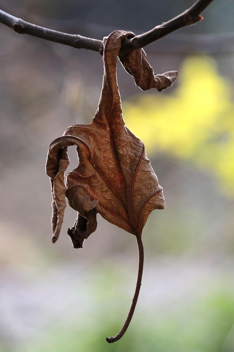 autumn-4578315_1920