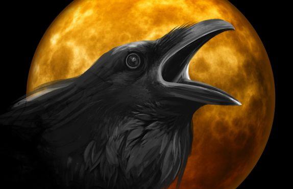 raven-995208_1920