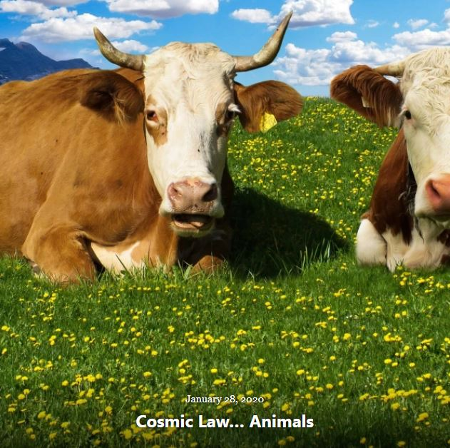 BLOG COSMIC LAW ANIMALS JAN 28 2020