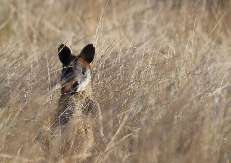 wildlife-3264736_1920
