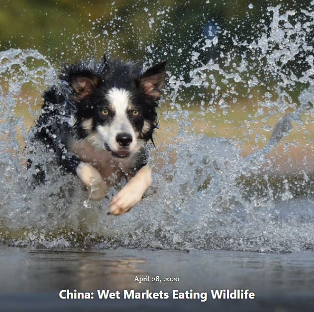 BLOG CHINA WET MARKETS EATING WILDLIFE APRIL 28 2020